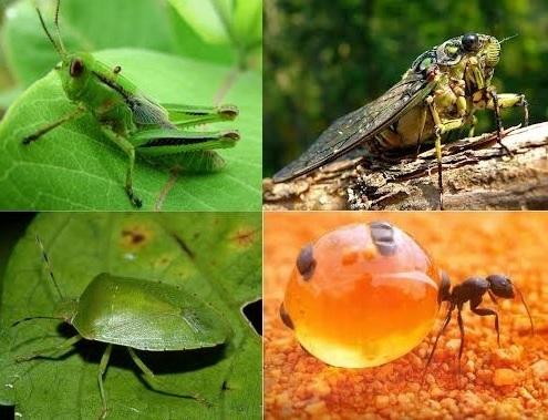 BMden açlığa çözüm: Böcekler